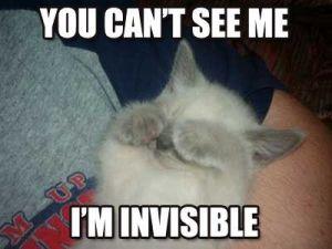 invisible-catz